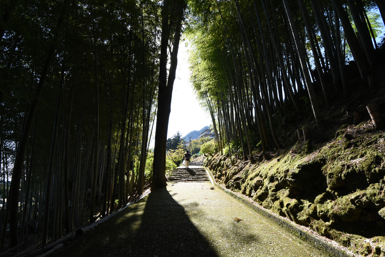 石段を登り、竹林を抜けて